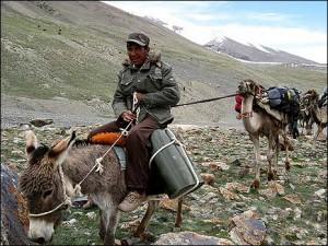 sherpa folk på æsel